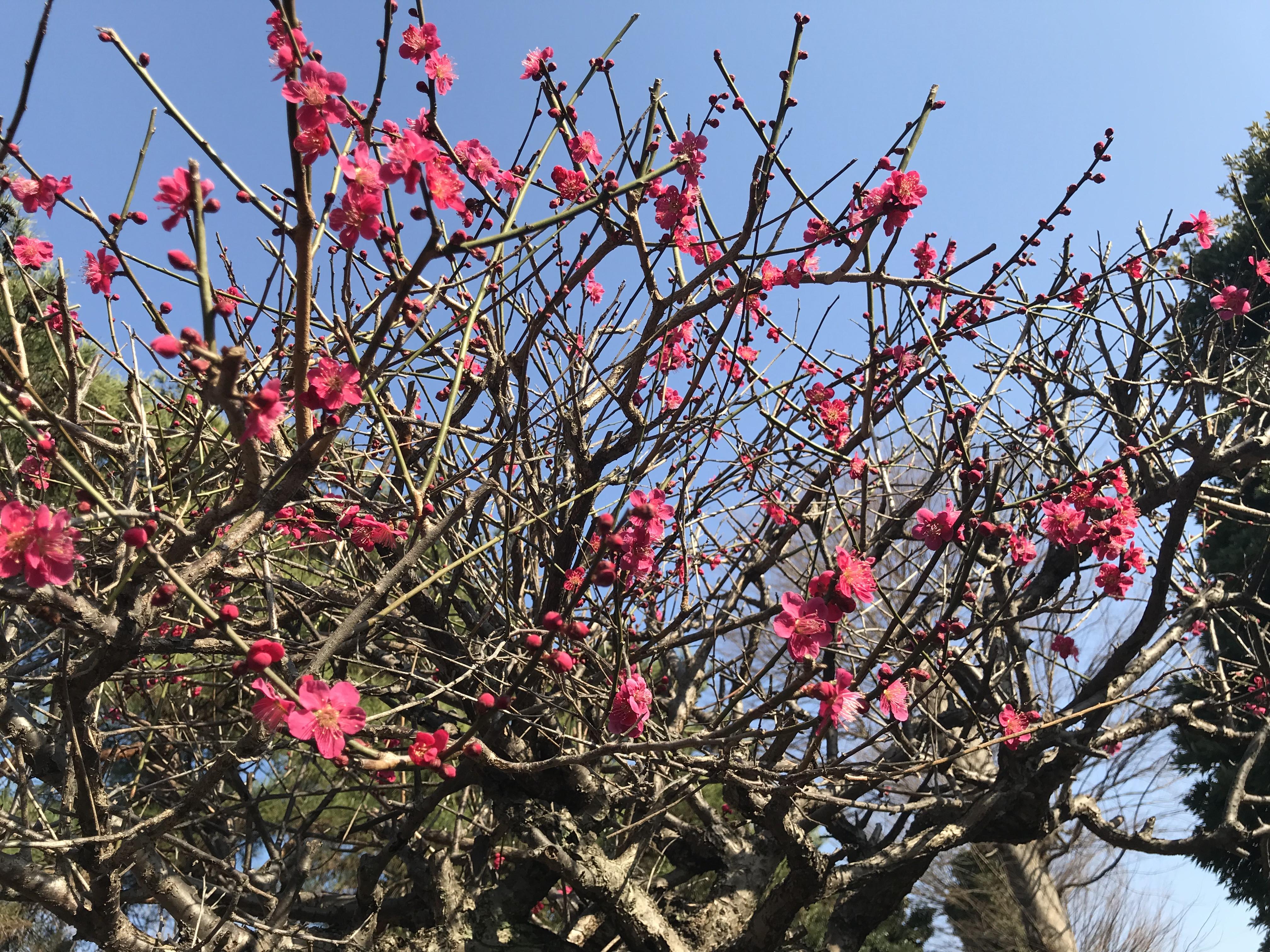 花粉症とアロマセラピー