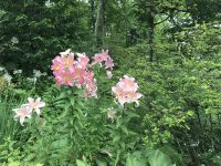 咳喘息とアロマセラピー